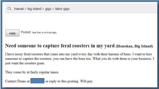 Capture the roosters
