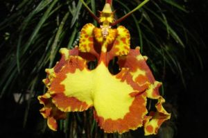 orchid from Hawaii Tropical Botanical Gardens