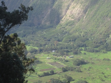 Patches of crops in Waipio Valley.