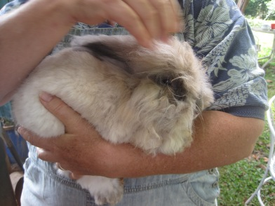 angora bunny out of cage