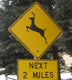 deer crossing closeup