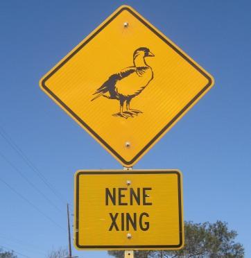 Nene crossing