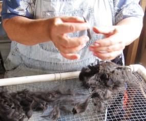 picking through the fleece - hair