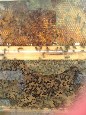 Beeing Aloha Honey demonstration hive