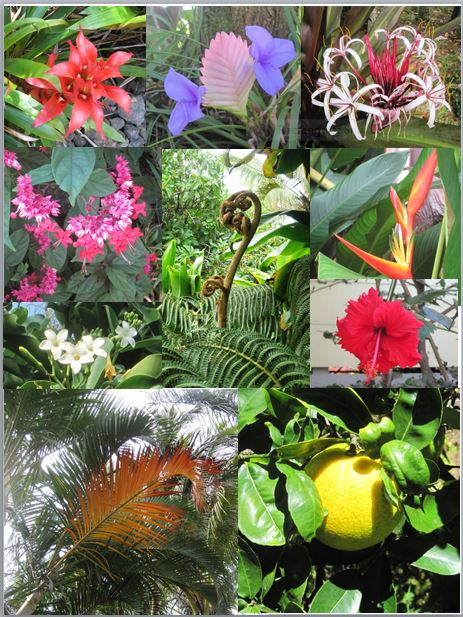 7.6.2. plant and flower collage