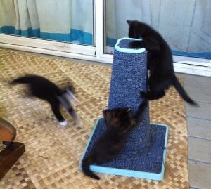 kitties playing 118
