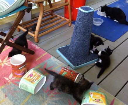 kitties playing 139