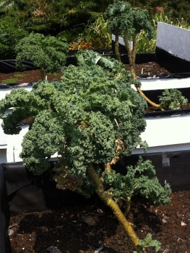 No, this is not a tree. It's curly kale whose leaves have been harvested bottom up.
