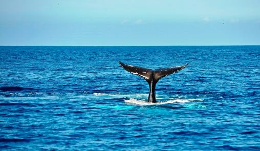 perfect shot of tail fluke
