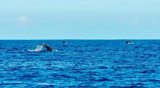 three whales closeup - aggressive behavior