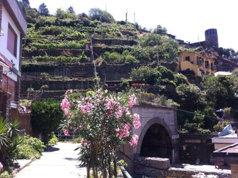 Hillside terraces in the Cinque Terre