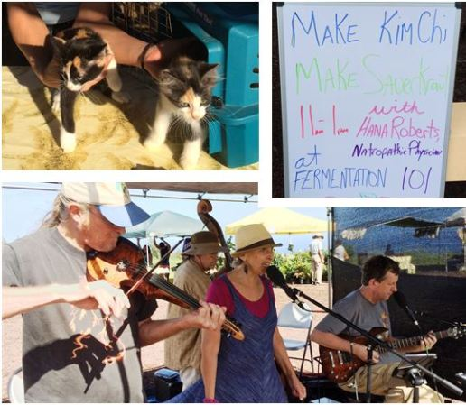 Music, education, free kitties at Hamakua Harvest Farmer's Market