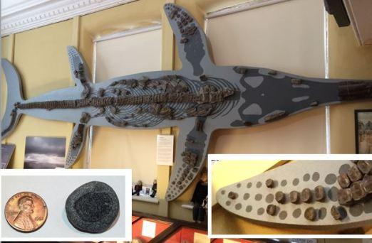 paddle bone fossil and ichthyosaur