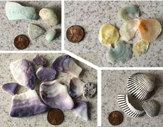 Shells from Staten Island