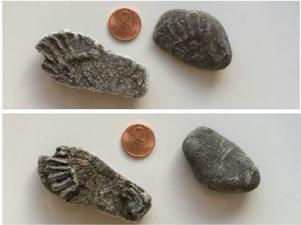 sept-fossil-hunt-ammonites