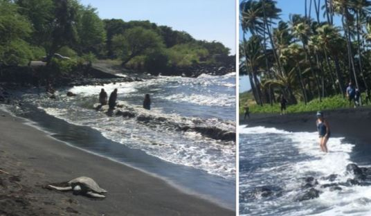 the-water-is-cold-at-punaluu-black-sand-beach-park