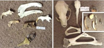some-of-lynns-bone-collection