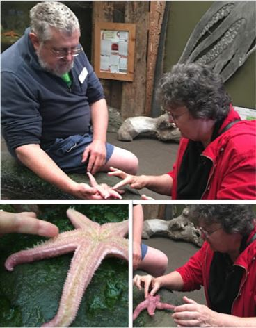 hands-on-with-a-sea-star